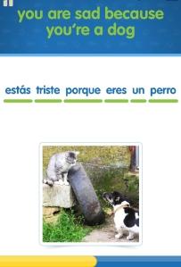 Katz und Hund bei CatSpanish