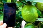 Galaxy Nexus vs. Zitrone