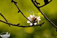 Blütenpracht ganz nah