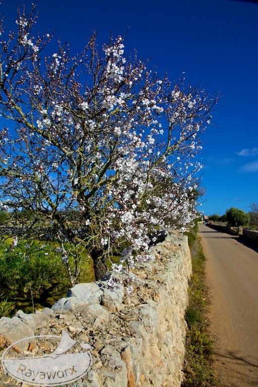 Autofahren auf Mallorca – vom Tempo