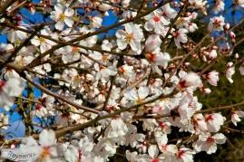 Ganz viele Blüten
