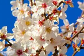 Viele Blüten