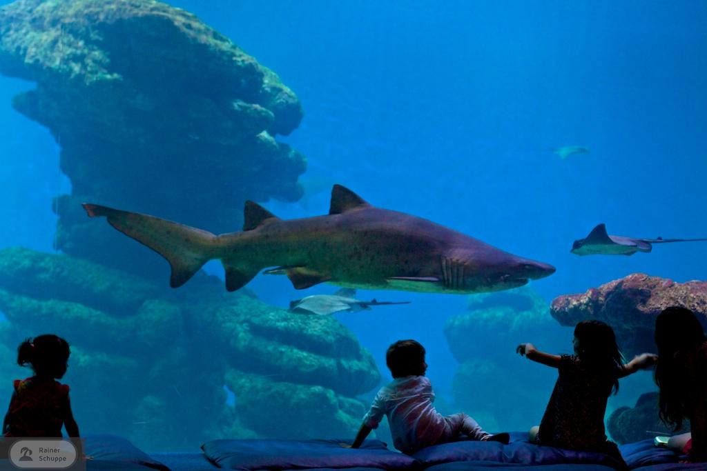 Kinder und ein Hai