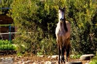 Pferd im Neugiermodus