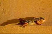 El Gecko - die Mückenfalle