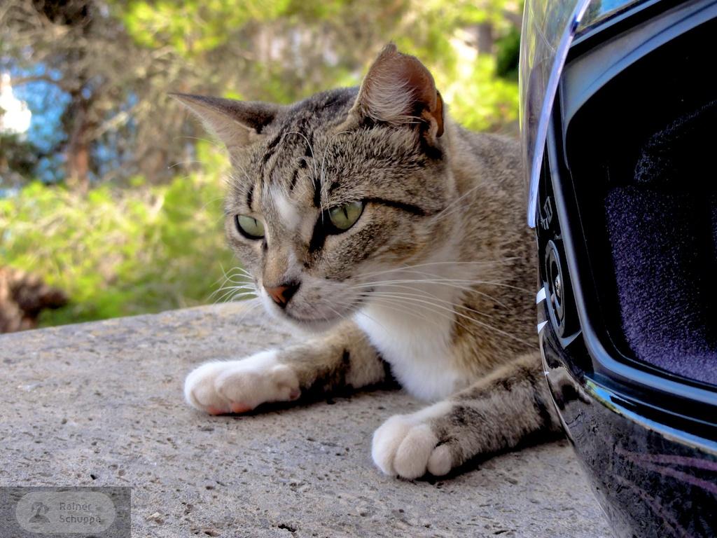 Katze und Helm