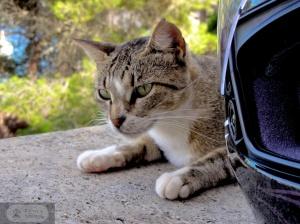 Katze an Helm
