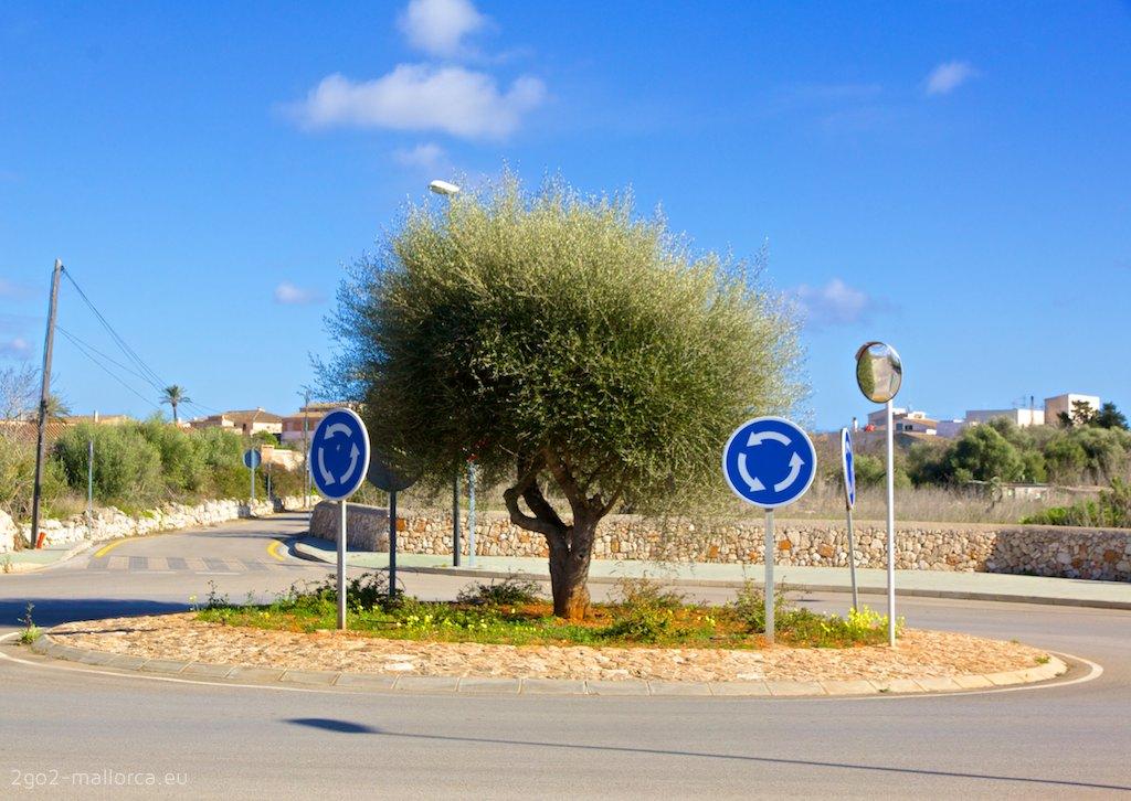 Baum im Kreisverkehr