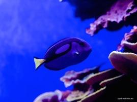 Palma Aquarium: Dori