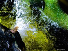 Regendwald im Palma Aquarium mit Frosch