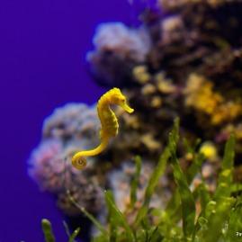 Palma Aquarium Seepferdchen