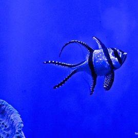 Fisch im Palma Aquarium
