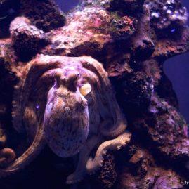 Palma Aquarium Suchbild mit Krake