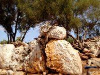 Steine und Baumwurzel