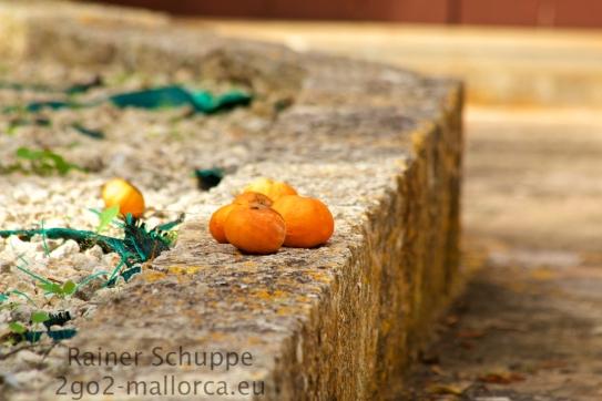 Ein paar Mandarinen im Sonnenlicht
