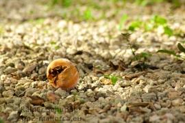 Einsame Orange im Kiesbett