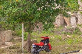 Kindermotorrad unter Orangenbaum