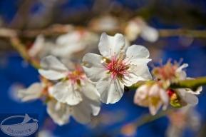 Weisse Blüte vor blauem Himmel - perfekt
