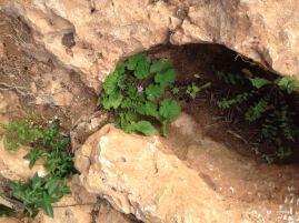 Blütenpflanze Stein Can Jordi