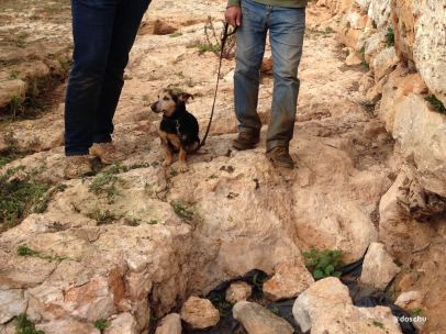 Hund Ausgrabungsstätte