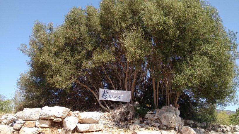 Ausgrabungsstätte Can Jordi Mallorca
