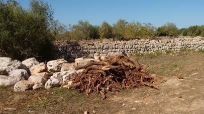 Bewegte Steine und Wurzeln