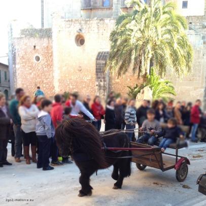 Pony zur Tiersegnung