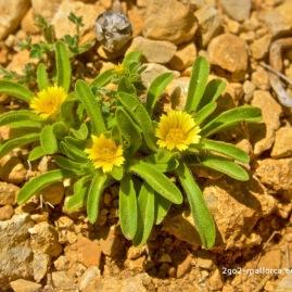 Kleine Blume am Wegesrand