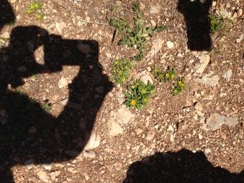 Blume und Fotografinnenschatten