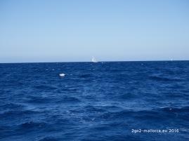 segelboot mallorca meer wind
