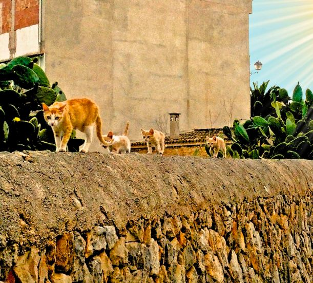 Catwalk auf der Mauer - Santanyí, Mallorca