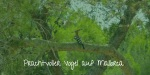 Mallorca Vogelwelt