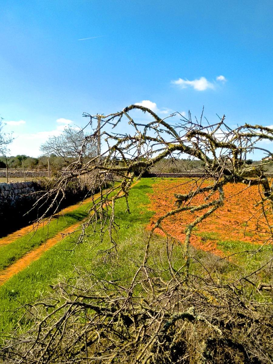 Kahler Mandelbaum vor frischem grün - Herbststimmung oder doch eher Frühling