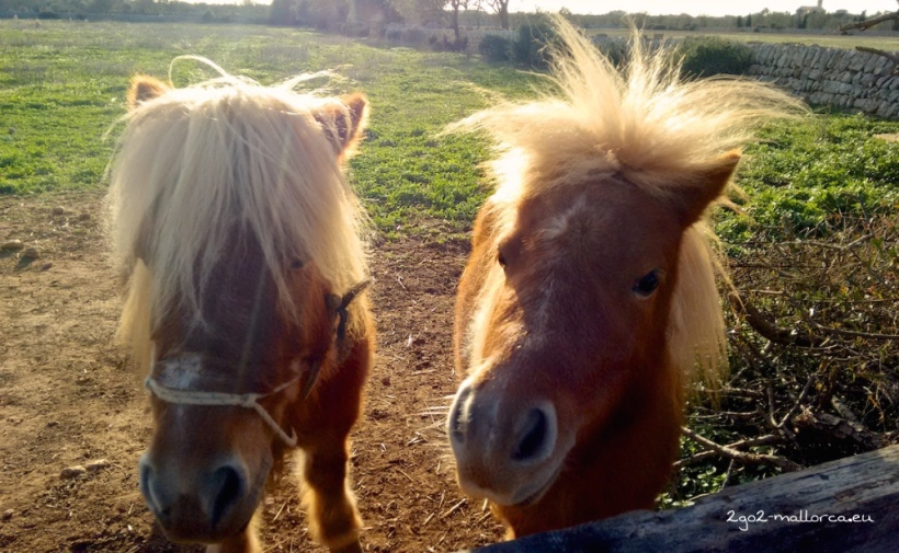 Herbst Mallorca Sonne Ponies