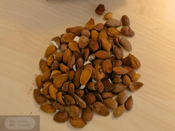 Der leckere Inhalt der harten Schalen - Mallorca Snack