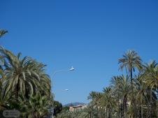 Möwe in der Loge - der beste Platz beim Halbmarathon in Palma bei strahlendem Sonnenschein