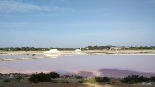 Rosa Farbstoff von Halobacterium salinarum fürs Federkleid der Flamingos
