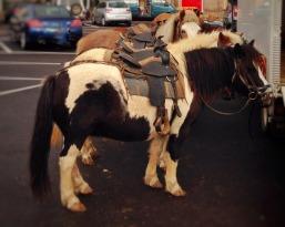 Ponys Sa Fira Santanyi