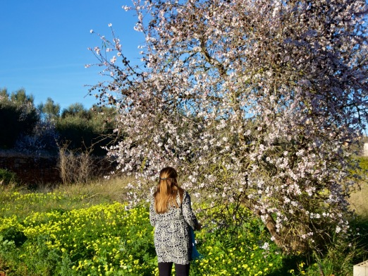 Baum Wiese Mallorca Mandelblüte