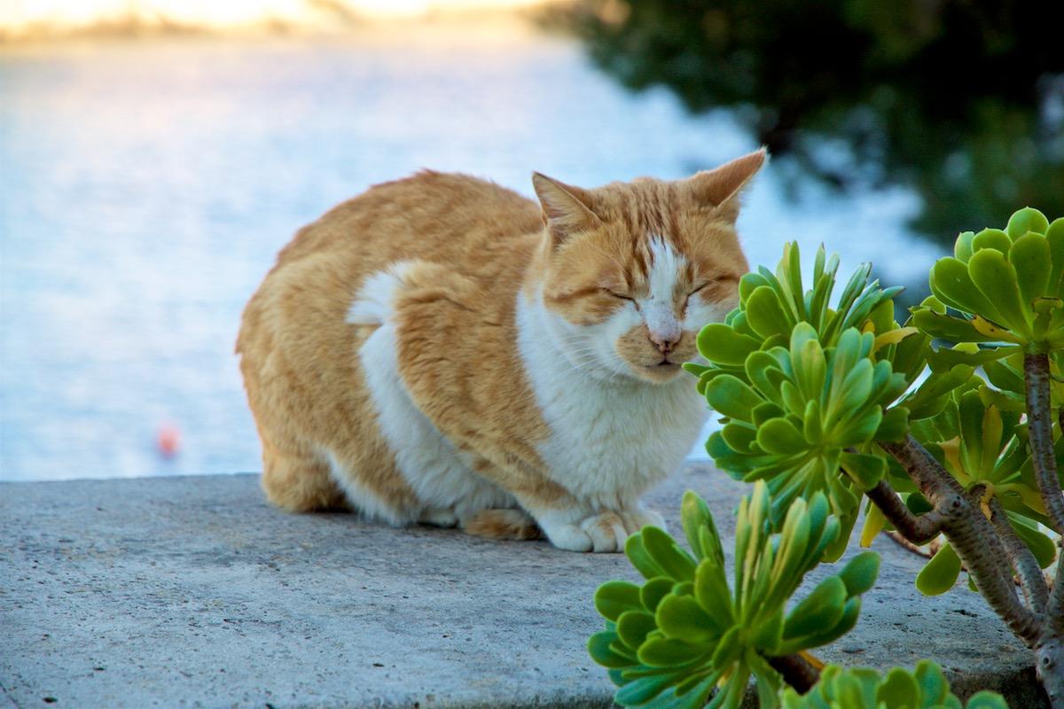 Katze Cala Figuera Mallorca