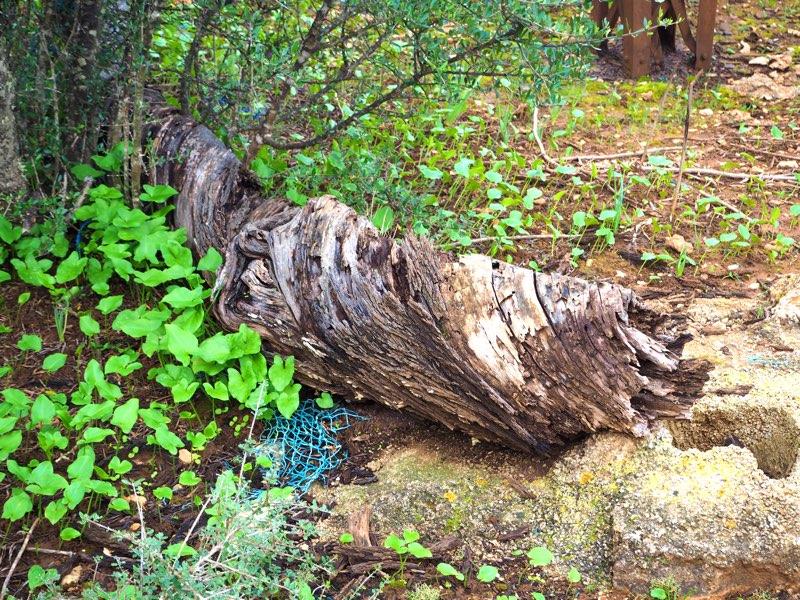 Orkanopfer Baum